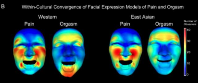 Mapa de calor das movimentações faciais para cada grupo