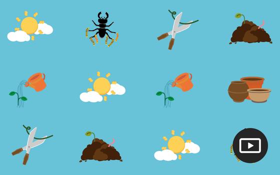 Como parar de matar suas plantas em 6 pontos
