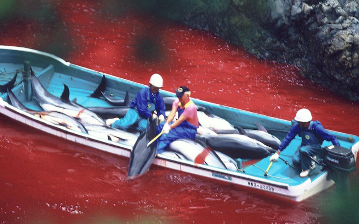 Abate de golfinhos em Taiji, no Japão