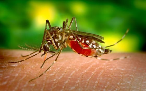 Por que a OMS não quer adiar a Olimpíada pelo zika