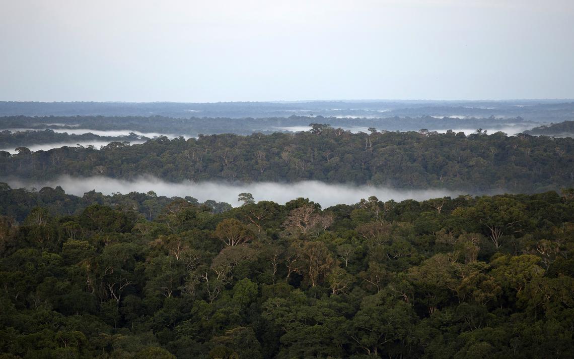Vista da floresta em São Sebastião do Uatuma, em 2015 no Amazonas