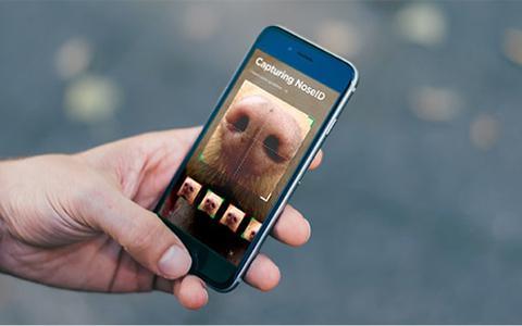 O aplicativo que localiza cães perdidos pelos seus focinhos