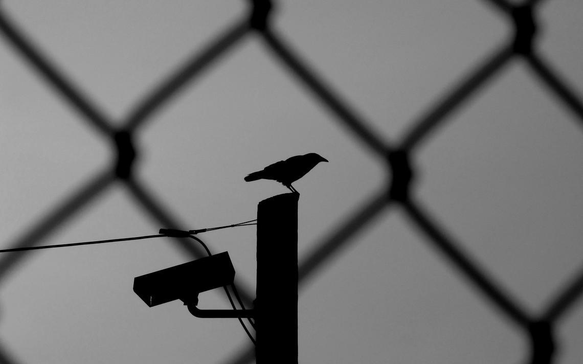 Atrás de uma grade, um corvo repousa sobre uma câmera de segurança
