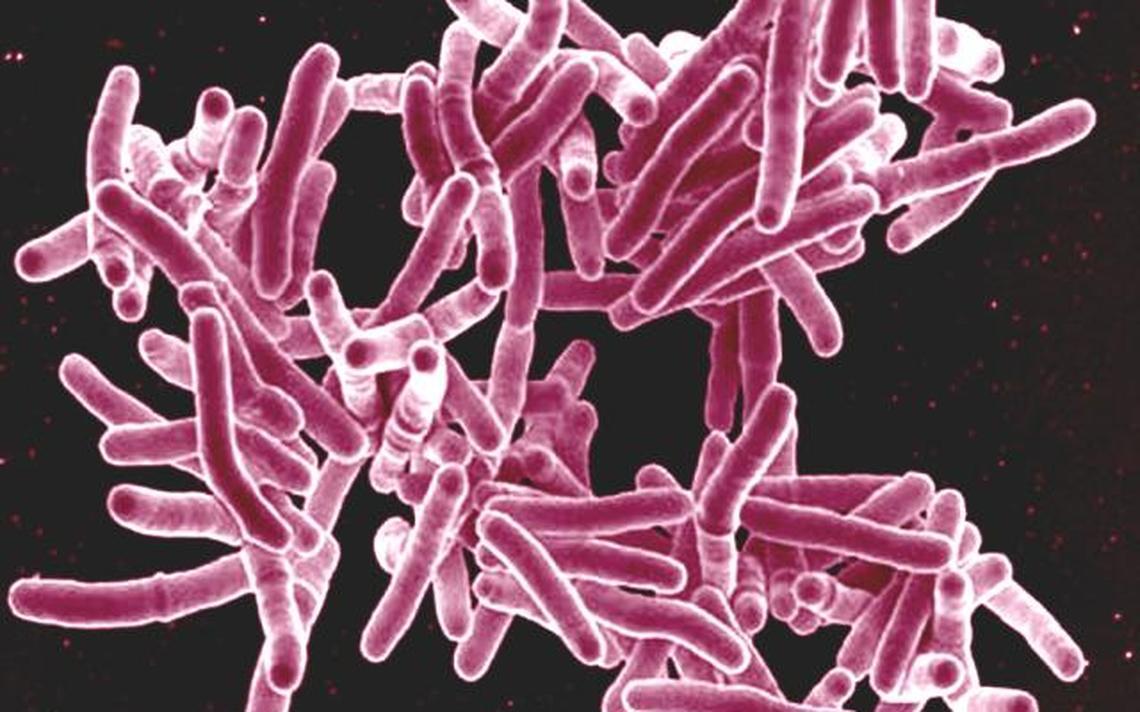 Chamadas de 'superbactérias', as bactérias resistentes aos antibióticos disponíveis são um problema fundamentalmente hospitalar