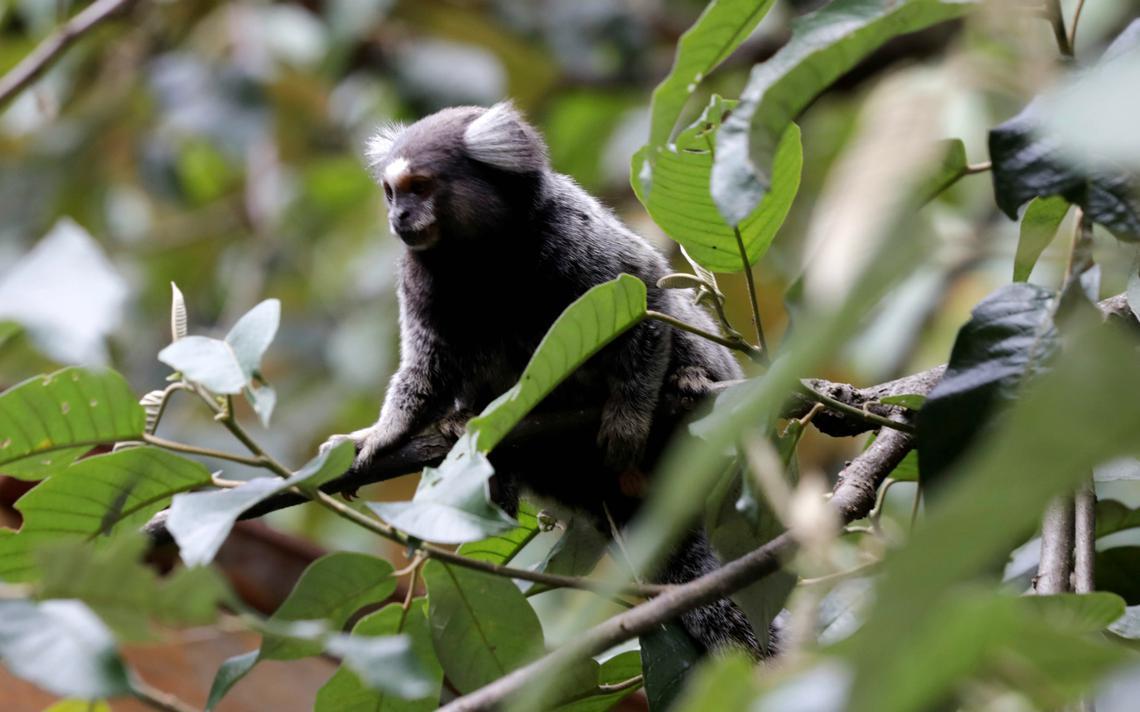 Baixa no número de mamíferos predadores e herbívoros desequilibram ecossistema