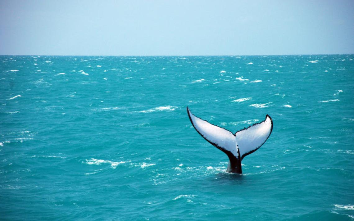 Baleia vista no litoral baiano, em 2017