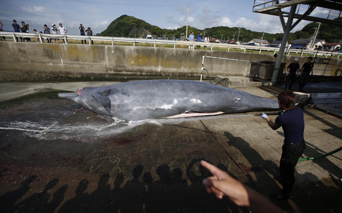Homem joga água em baleia antes de destripá-la, enquanto estudantes aguardam para observá-la, em Minamiboso, no Japão, em 2014