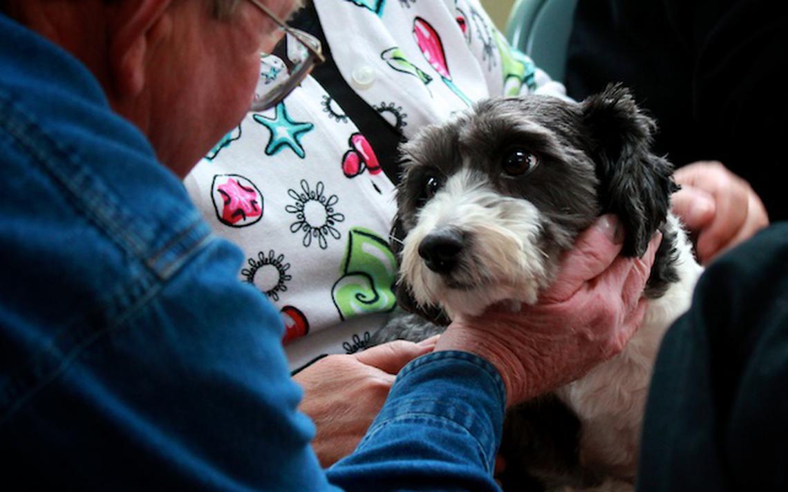 Cachorro olha para homem que o acaricia