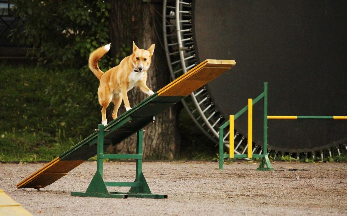 Uma nova pesquisa afirma que cães têm lembranças