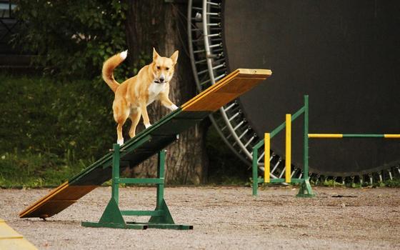 Como pesquisadores tentam provar que cães não só aprendem regras, mas têm lembranças