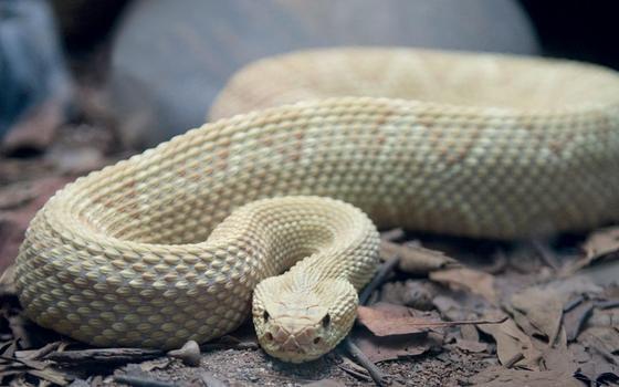Entre venenos, não só de serpentes