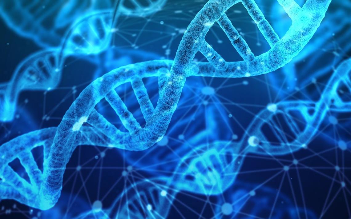 Cientistas 'editaram' o DNA de macacos, adicionando um gene humano