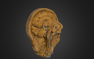 Modelo 3D da anatomia da cabeça humana