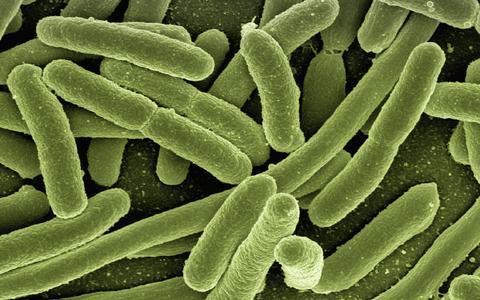 Como micróbios podem influenciar as suas amizades