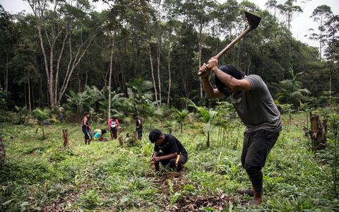 Floresta democrática: frente em defesa do cinturão verde guarani