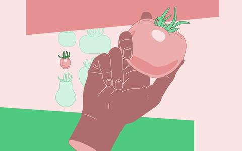 A história ilustrada de um saber: domesticação das plantas