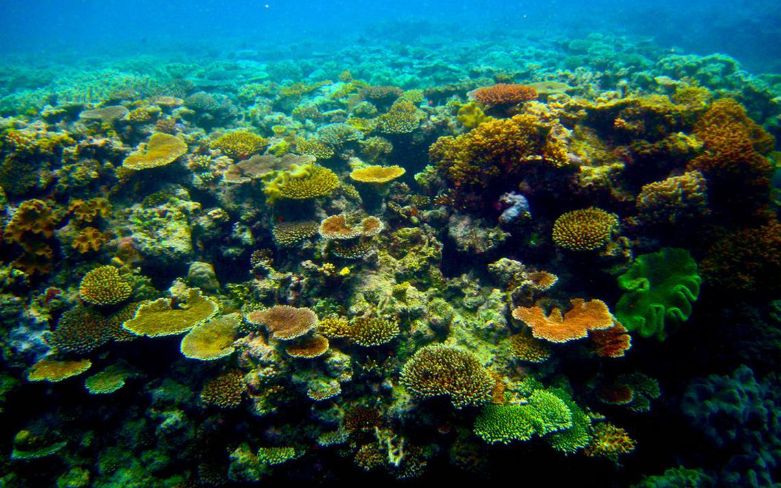 Grande Barreira de Corais, na costa da Austrália