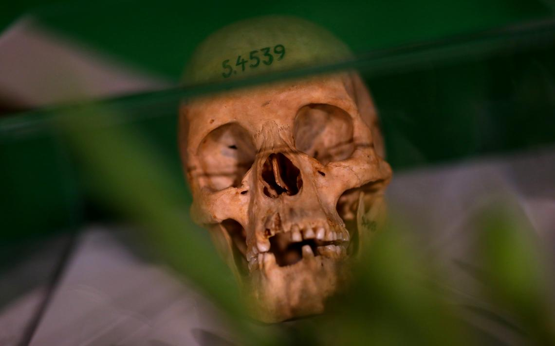 Cranio humano