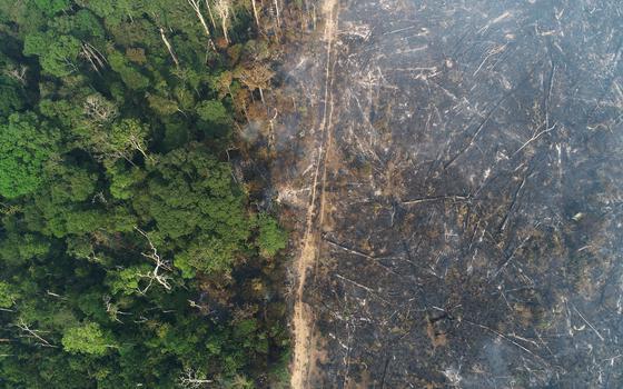O papel do nitrogênio na regeneração das florestas