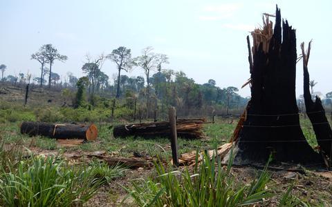 Como a especulação fundiária impulsiona o desmatamento
