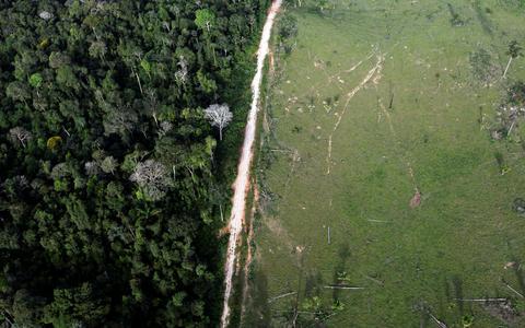 Desmate na Amazônia cresce 51% em 11 meses, diz instituto