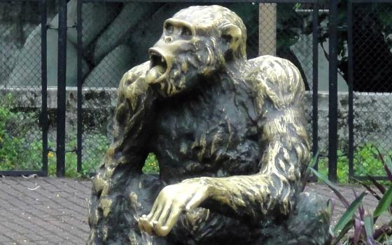 Candidatos animais: as histórias de Cacareco e Macaco Tião