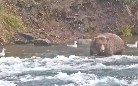 O site de webcams que transmitem a vida na natureza