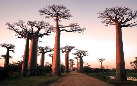 Árvores tropicais vivem menos