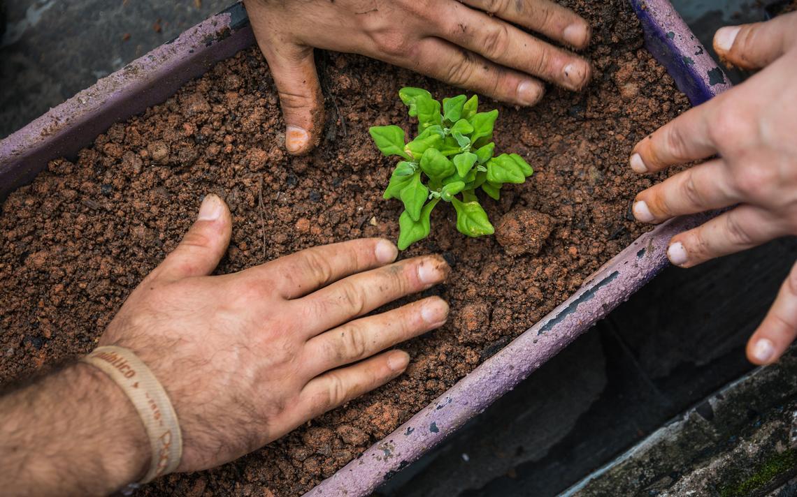 Horta sendo preparada em jardineira