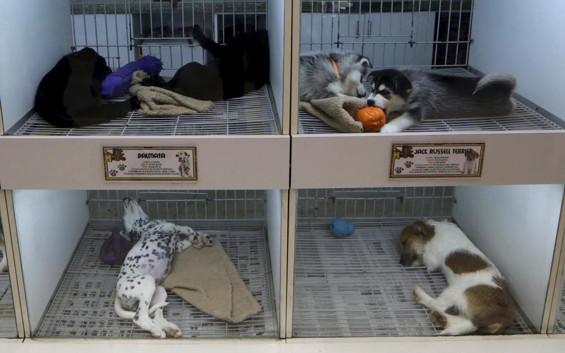 Filhotes de cachorros em gaiolas de pet shop, em Lima, no Peru