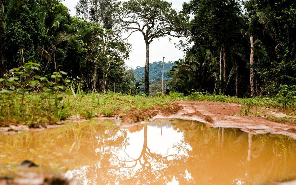 Área degradada em Colniza, no Mato Grosso. STF permite que multas sejam trocadas por recuperação de terras