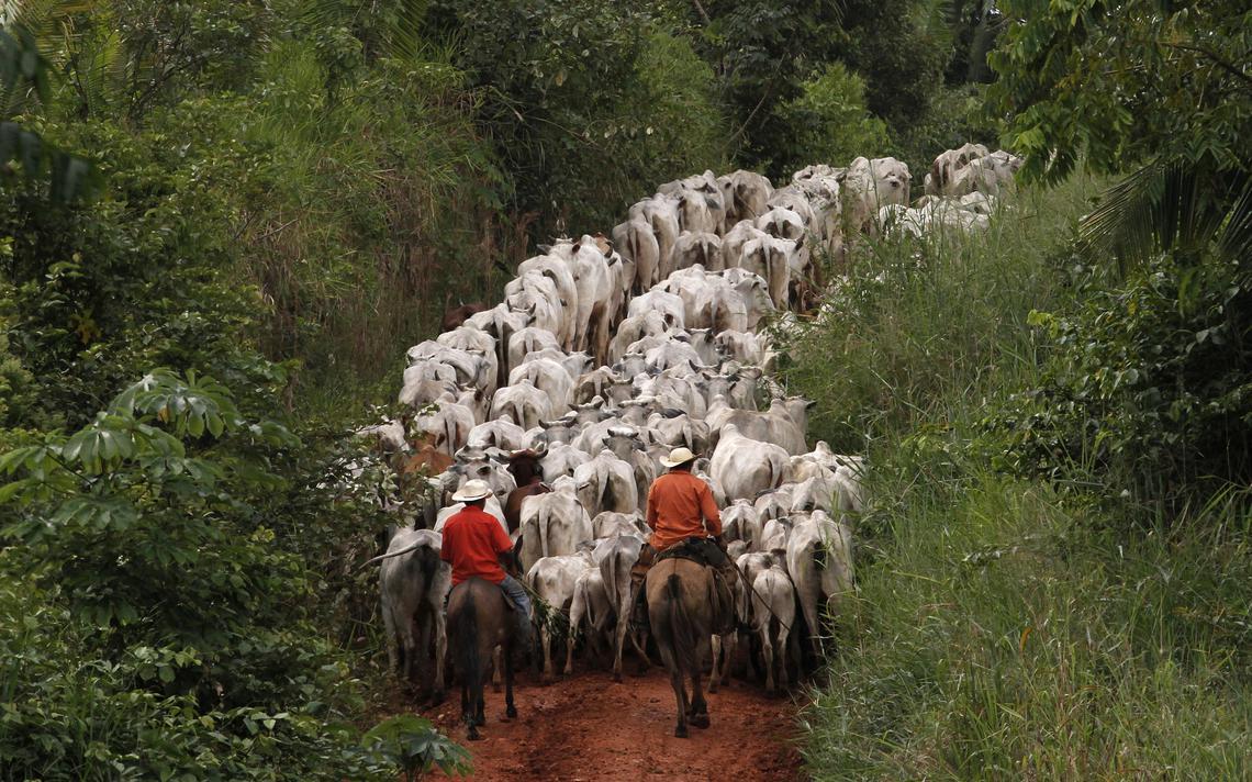 Homens tocam gado em meio à Amazônia em 2013, em Uruara, no Pará