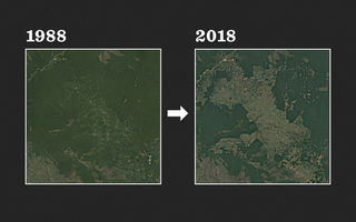Imagens de satélite mostrando o desmatamento da Amazônia em Rondônia, de 1988 a 2018