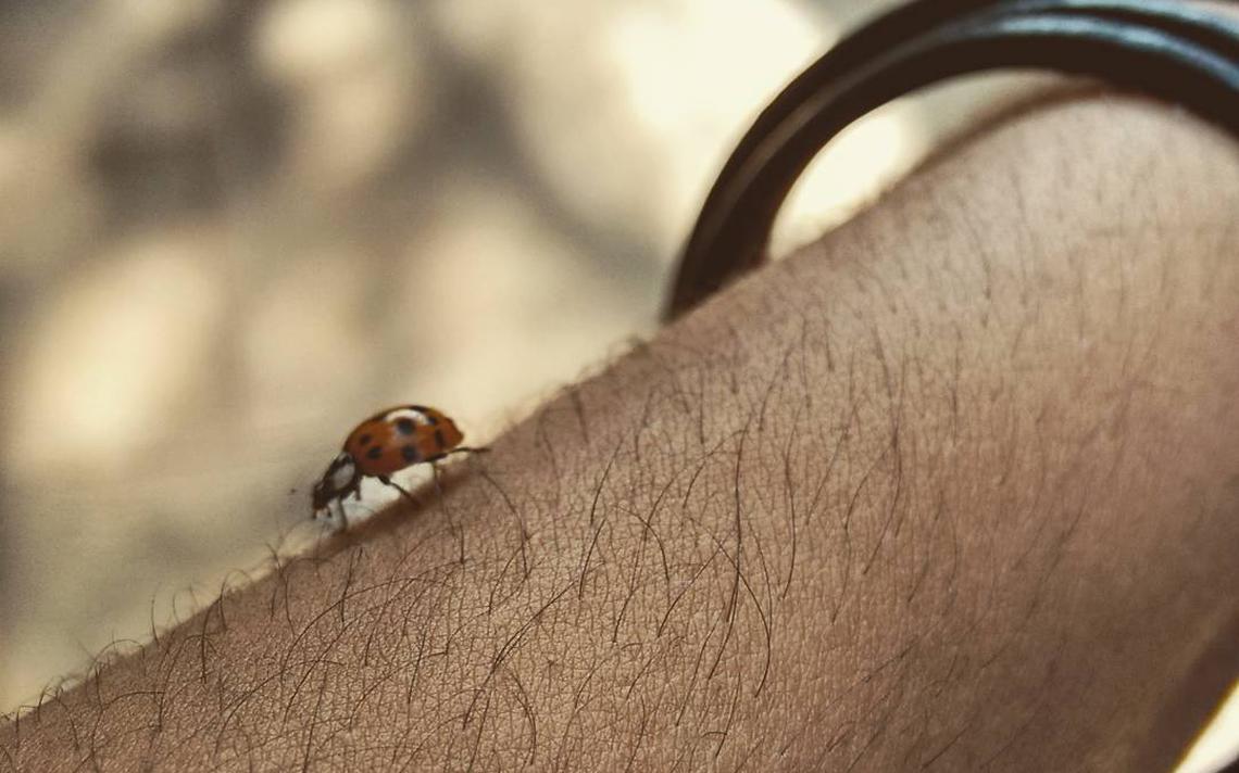 Detalhe de uma joaninha andando sobre o braço de uma pessoa.