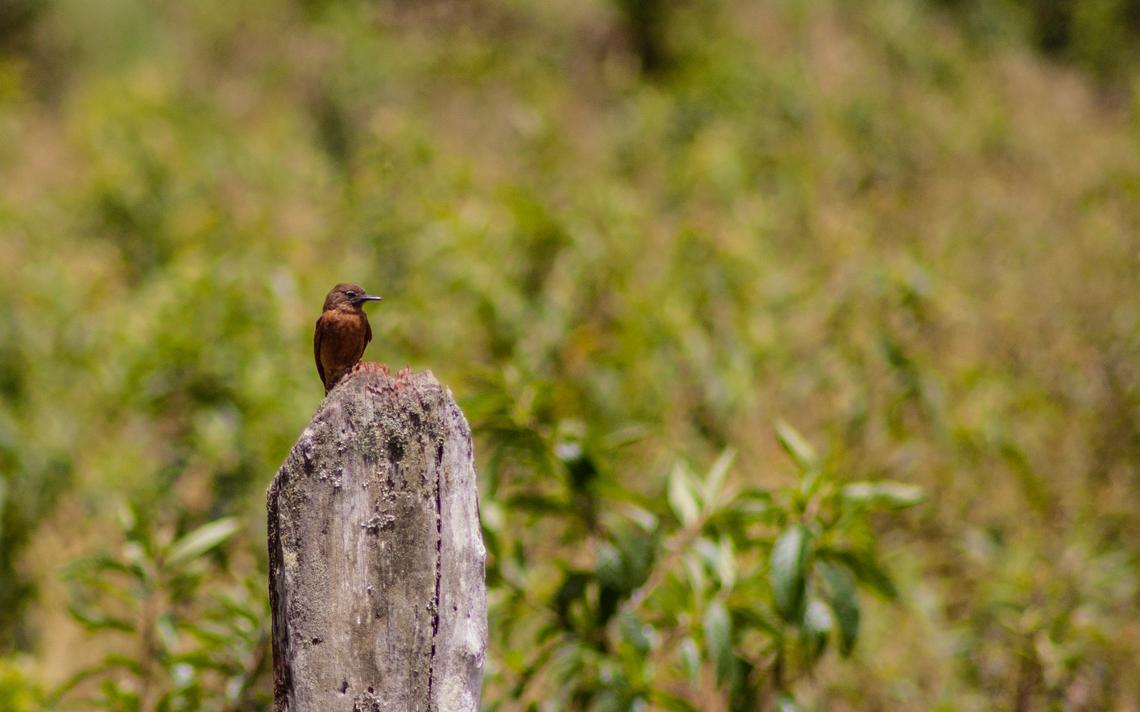 O principal banco de dados colarativo sobre pássaros brasileiros recebeu mais de 900 imagens por dia em 2017