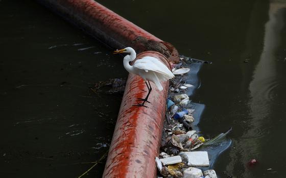 Licenciamento ambiental: o que está em jogo?