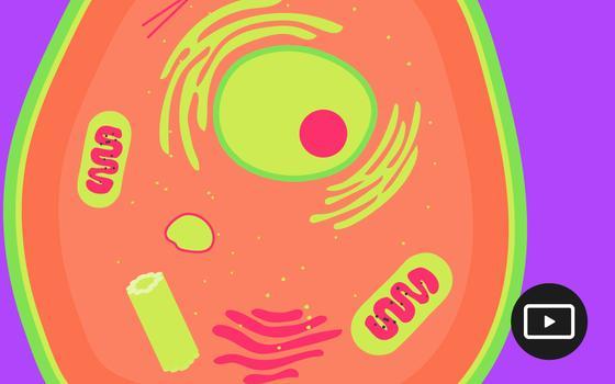 Por que as mitocôndrias são tão importantes para a vida