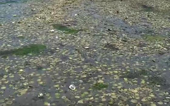 Onda de calor cozinha mariscos vivos em praia no Canadá