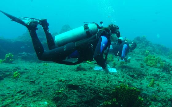 Como mergulhadores recreativos podem ajudar a biologia marinha