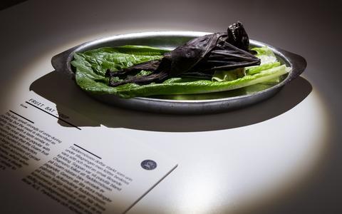 Como é o museu de comidas repugnantes na Suécia