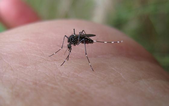 Dengue nas áreas olímpicas: número de casos cresceu no início do ano