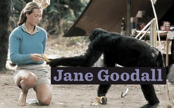 Jane Goodall, a rainha da selva