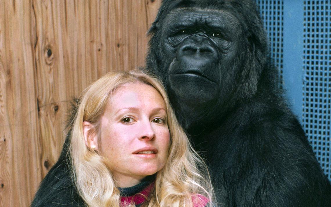 Penny Patterson e a gorila Koko