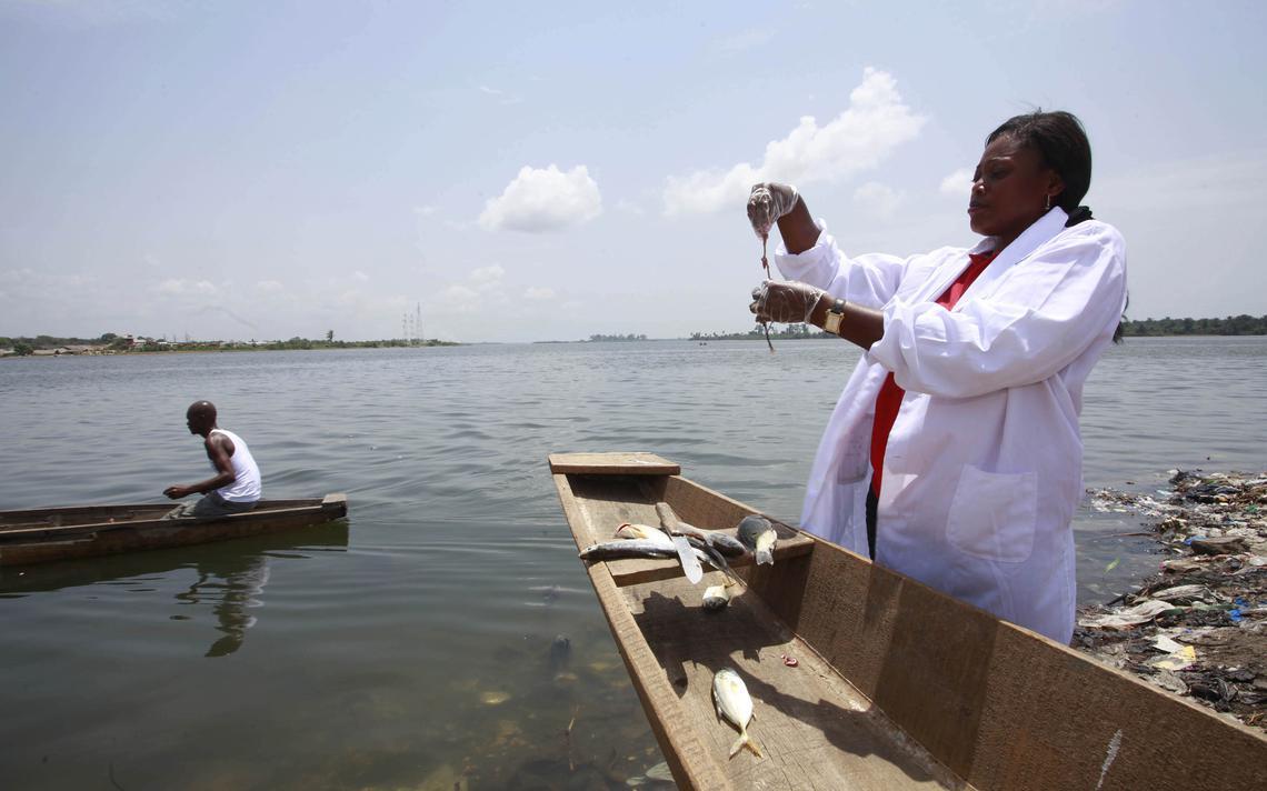 A pesquisadora Celine Nobah, membro da Associação de Mulheres Pesquisadoras da Costa do Marfim, colhe amostras, em 2013