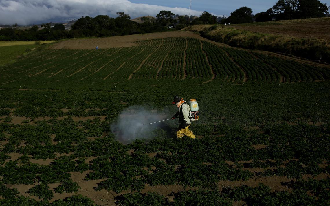 Agricultor aplica mistura de fertilizante e agrotóxicos em uma plantação de batatas em Carago, na Costa Rica, em abril de 2018