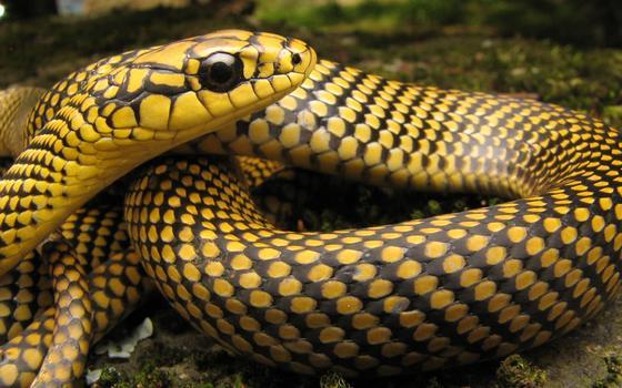 Onde estão as serpentes brasileiras