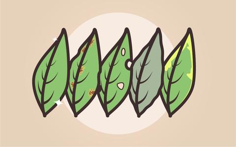 O que as folhas da sua planta estão 'dizendo'