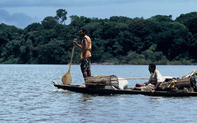 Quilombolas de Oriximiná transportam castanhas, sua maior fonte de renda, pelo rio Trombetas