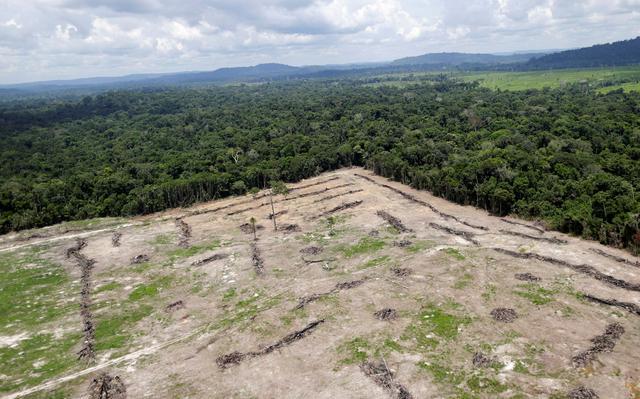 Área de terra desmatada em Novo Progresso, no Pará
