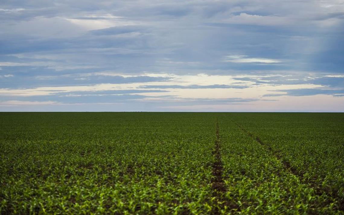 Plantação de soja no Mato Grosso